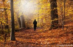 Herbstwald-